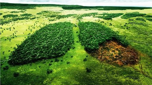 Dona Oxigeno al Planeta, Proyecto Sach'a