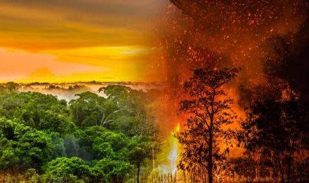 11 razones para donar oxígeno al planeta con el Proyecto Sach'a