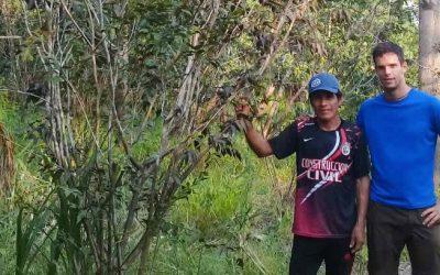 No hay ningún proyecto como Sach'a en el Amazonas