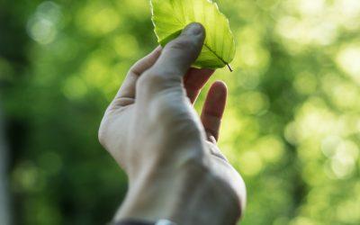 Proyecto de cooperación internacional impulsará industria agroforestal sostenible en América Latina