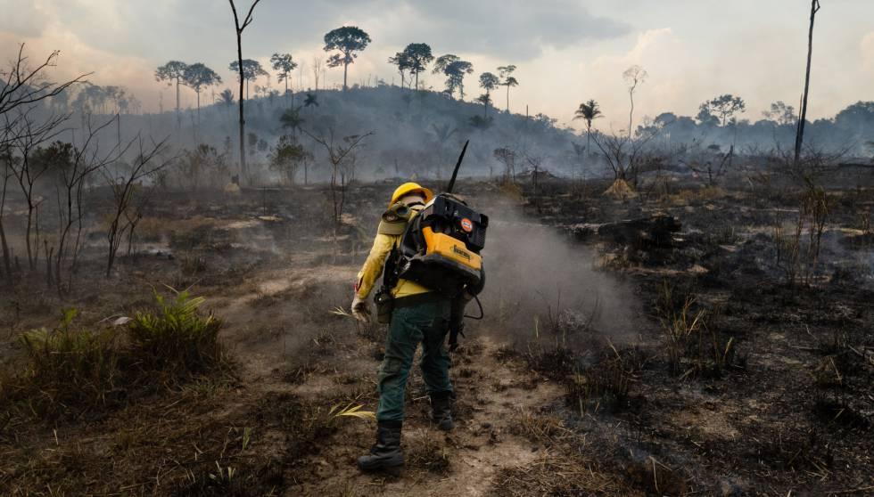 La deforestación de la Amazonía, una epidemia ambiental en silencioso auge