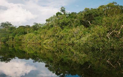 El Amazonas, más en peligro que nunca: libera más carbono del que absorbe