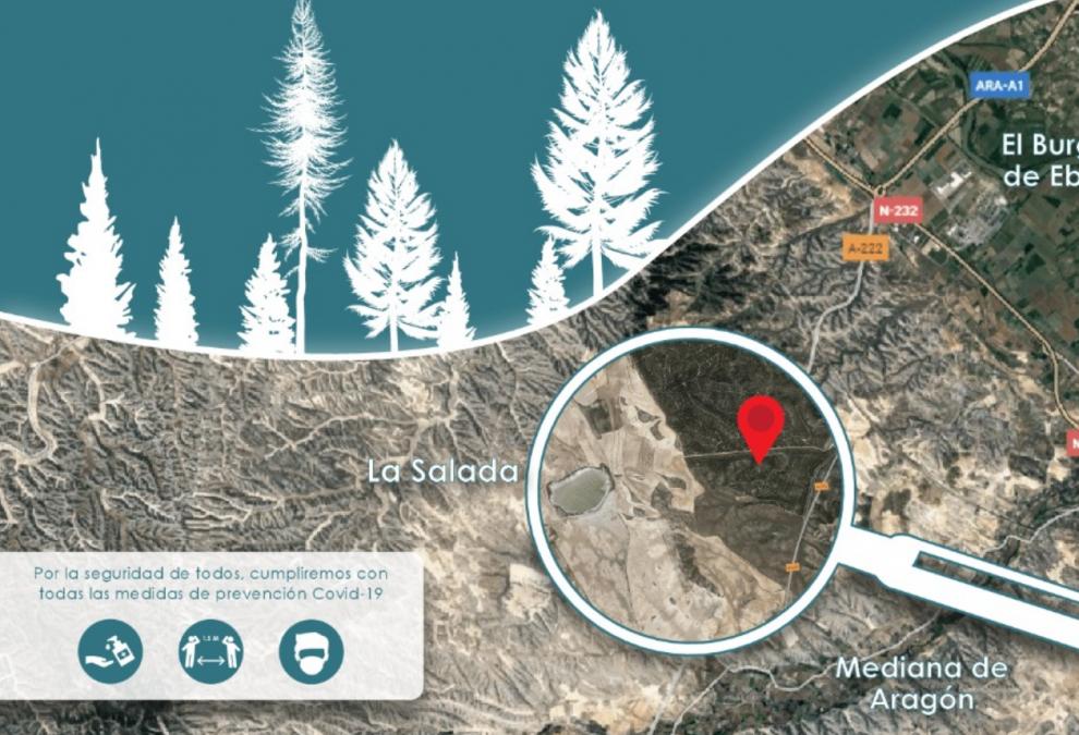 Una plantación colectiva para reforestar el monte de La Cartuja Baja