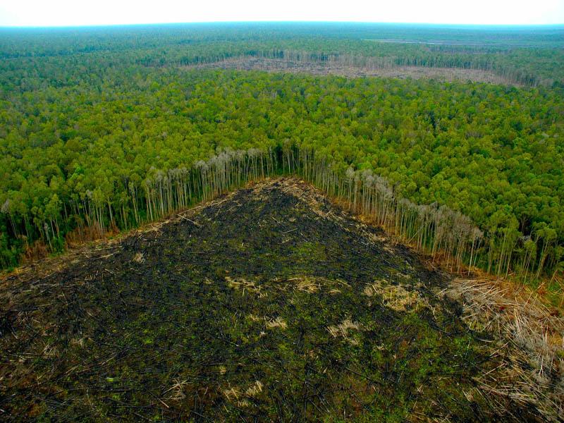 España, el tercer país de la UE más responsable de la deforestación tropical
